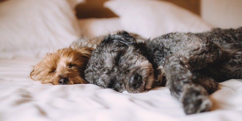 Best Dog Friendly Hotels in England