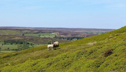 Yorkshire Dales Tour from York - 1 Day