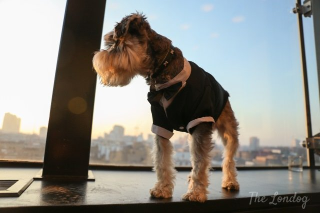 Dog Friendly Hotels In London Tourist England