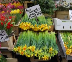 Columbia Road Flower Market 236