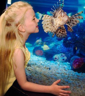 Sea Life London Tickets
