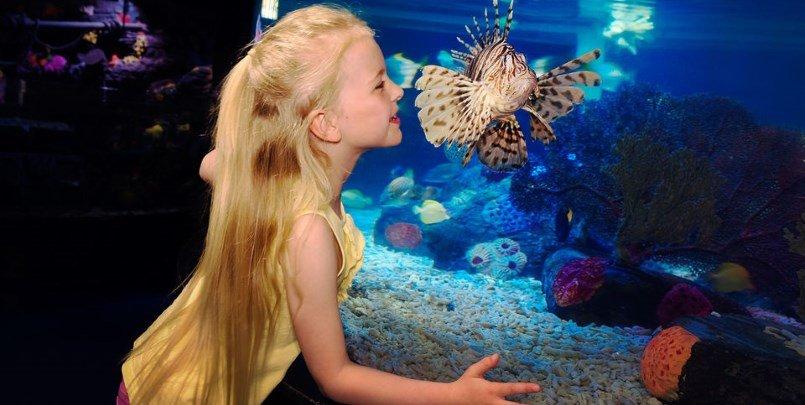Sea Life London 805 405