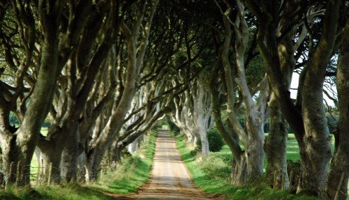 Game of Thrones with Giant's Causeway Tour from Belfast