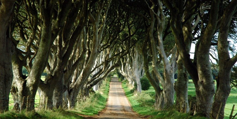 Dark Hedges 805